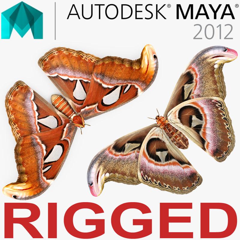 atlas moth rigged 3D model