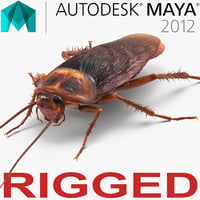 Cockroach Rigged for Maya