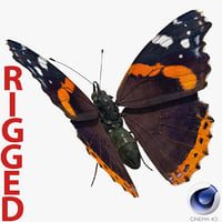 3D vanessa atalanta butterfly rigged
