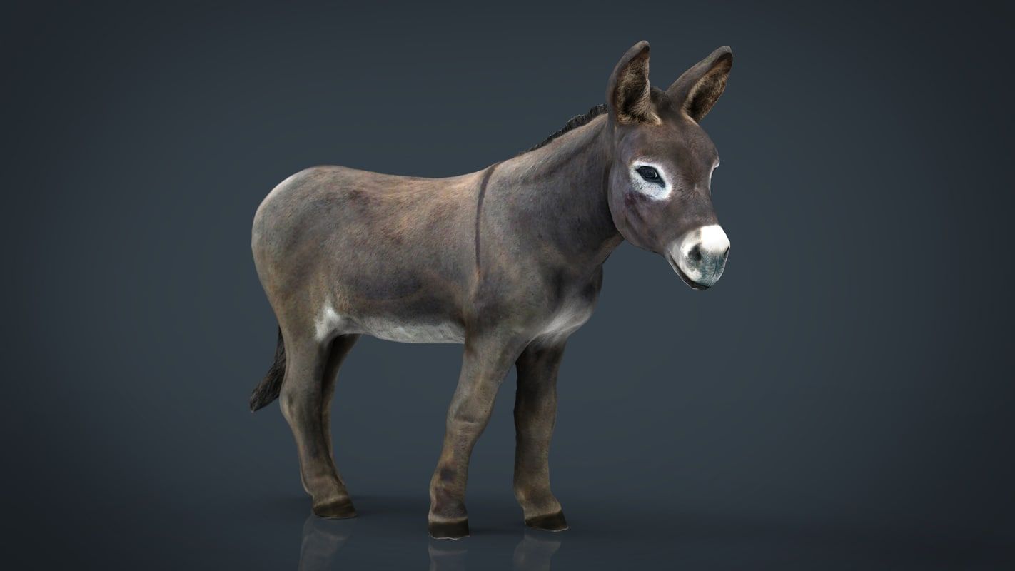 3D hd donkey - TurboSquid 1199267