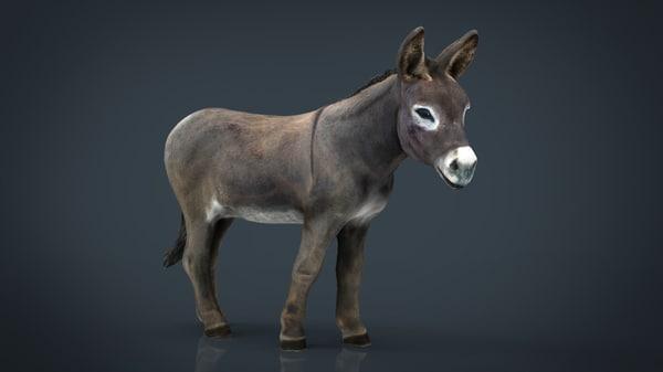 3D hd donkey