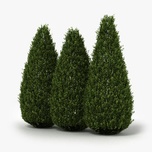 shrubs hedge realistic 3D model