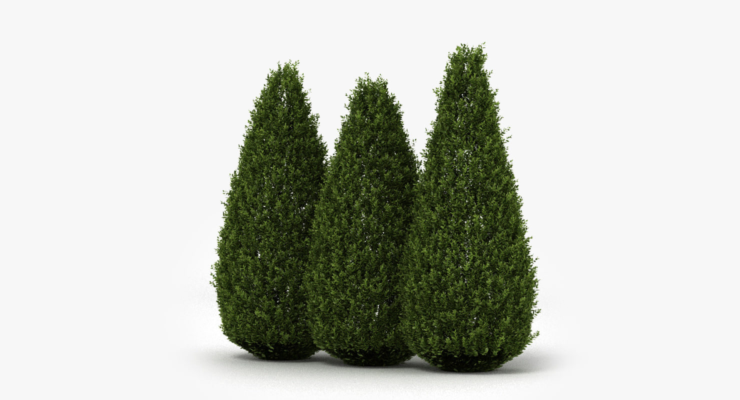 shrubs hedge realistic 3D model