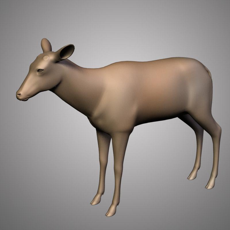 Deer anatomy 3D - TurboSquid 1199324