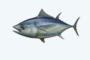 3D yellowfin tuna