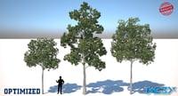 fagus trees 3D