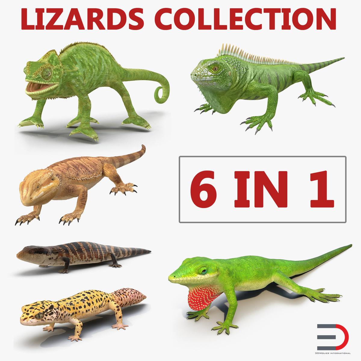 3D lizards 2 model
