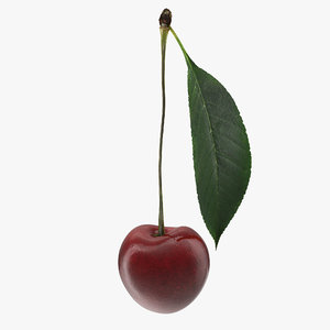 cherry leaf 3D model