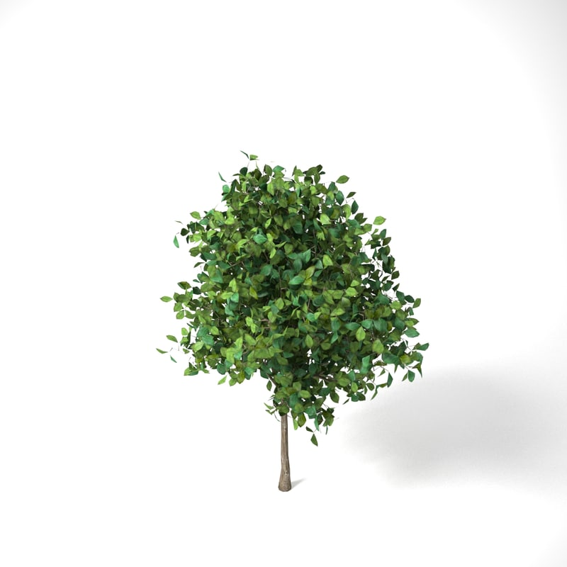 3D apple tree 2 5