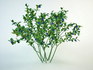 blueberrie model