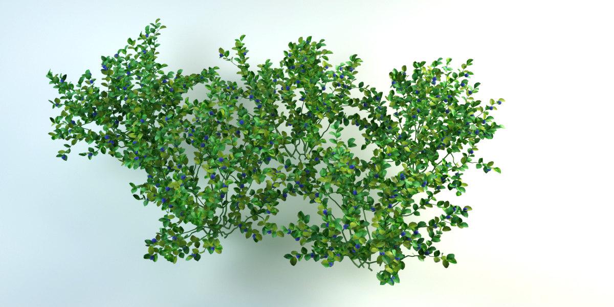 bushes cranberry 3D model