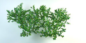bushes cranberry 3D model