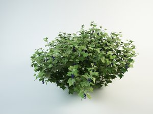blackcurrant bush 3D model