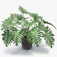 philodendron selloum pot 3D