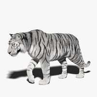 white tiger fur rigged 3D model