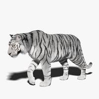 white tiger fur rigged 3D model