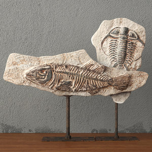 3D fossils stand model