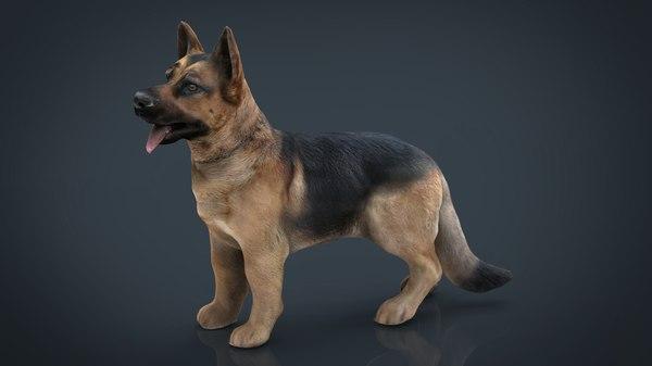 realistic german shepherd 3D model