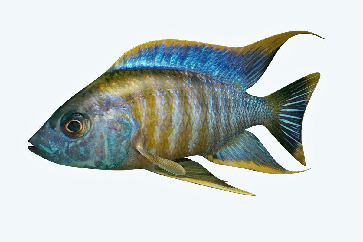 3D chicild fish