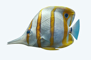 butterfly fish 3D