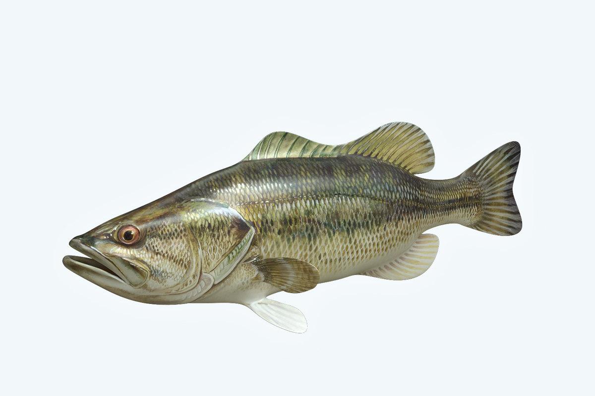 3D mangrove jack fish
