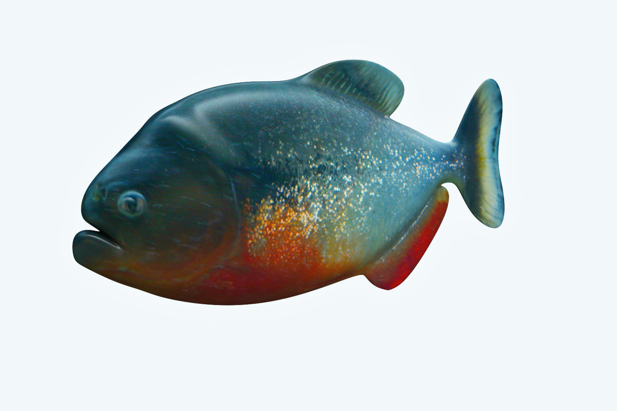 3D model piranha fish