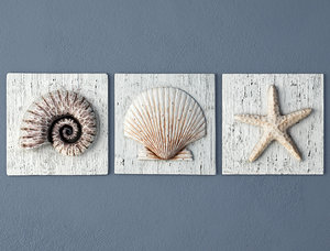 nautilus seashell starfish plaques 3D model