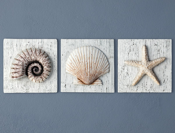 nautilus seashell starfish plaques 3D model
