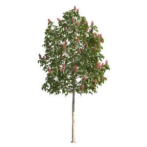3D flowering tree model