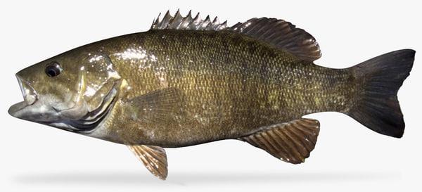 3D smallmouth bass