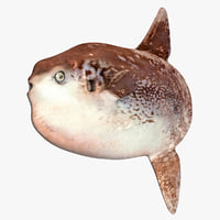 3D model southern sunfish