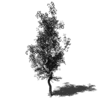 Tree-00001