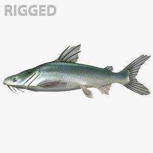 sea catfish model