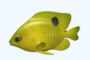 3D yellow fish