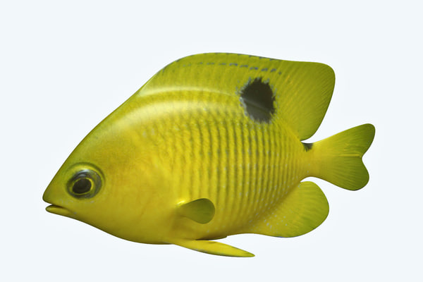 3D yellow fish
