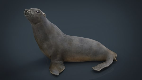 3D seal sea