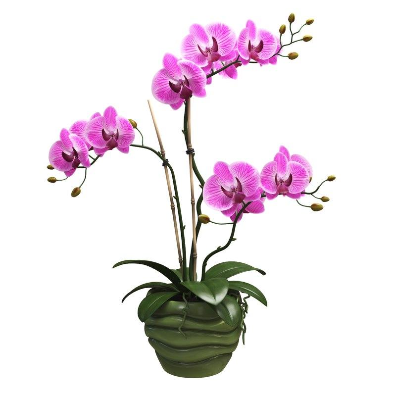 orchids pot 3D