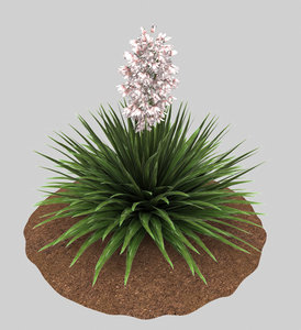 plant yucca pink 3D model