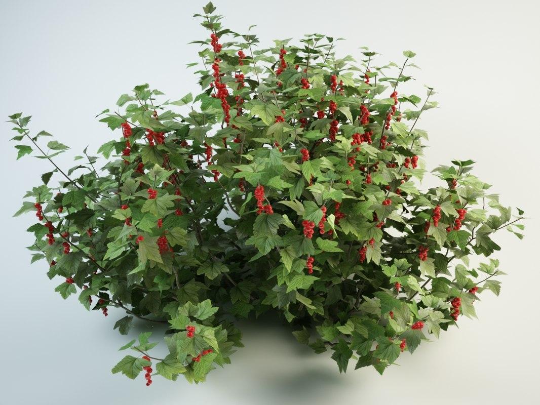 3D model redcurrant bush