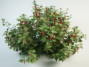 3D model redcurrant bush