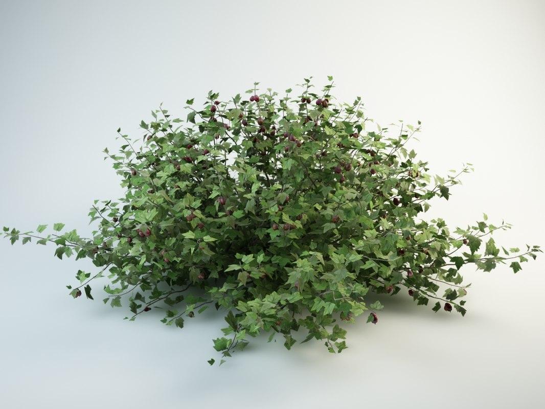 gooseberry ribes uva-crispa 3D