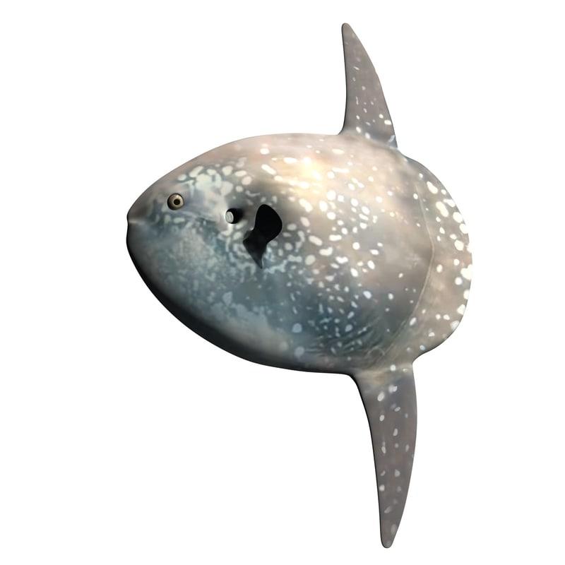 hoodwinker sunfish 3D