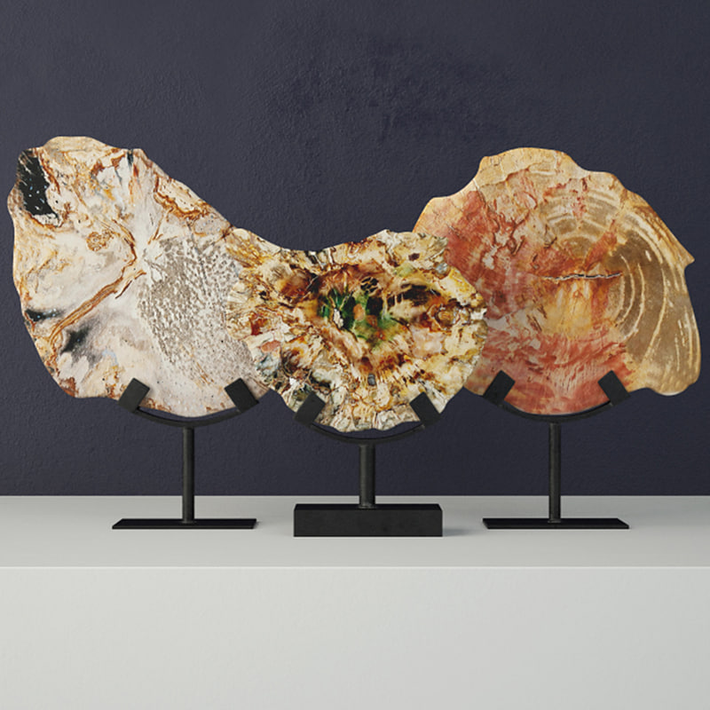petrified wood slices stand model