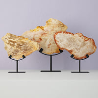3D petrified wood slices stand