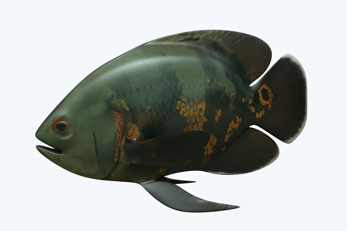 3D black tiger fish