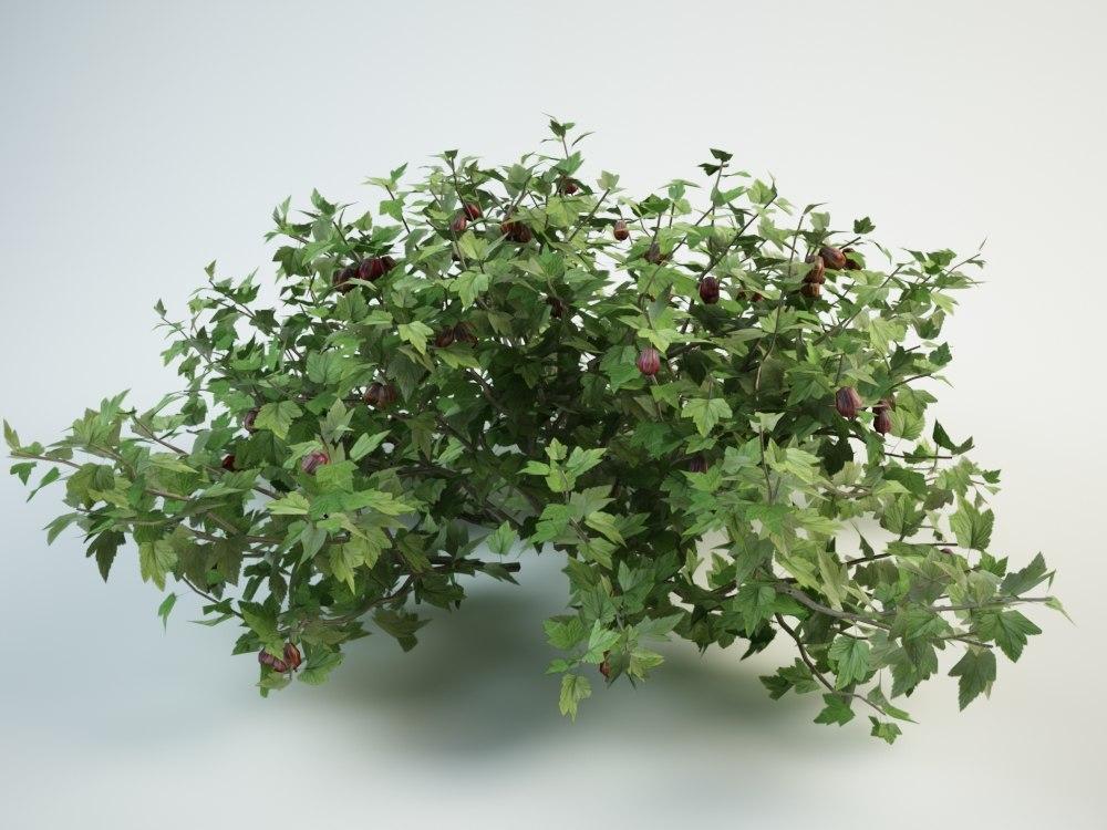3D small gooseberry