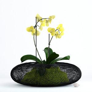 3D realistic phalaenopsis orchid grid