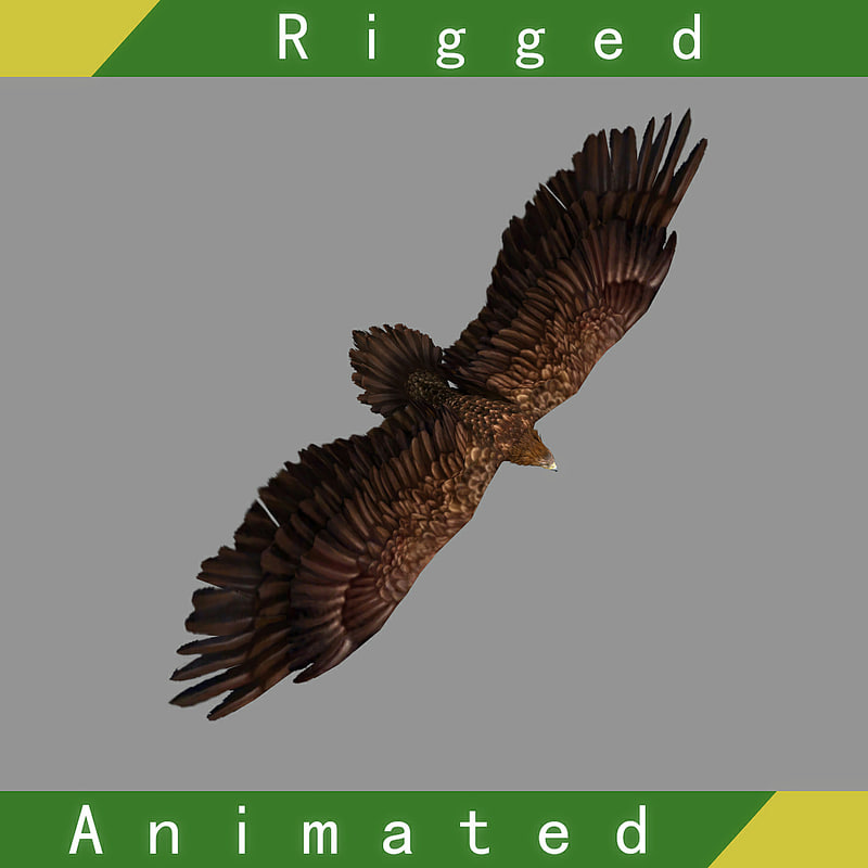 3D model eagle rigged animation