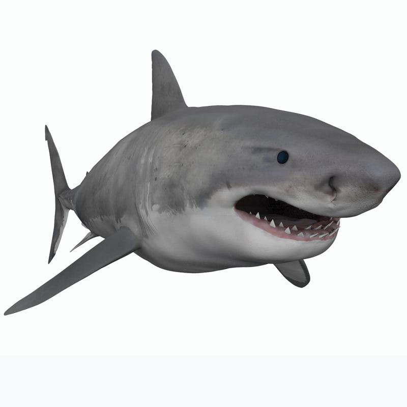 3D white shark male