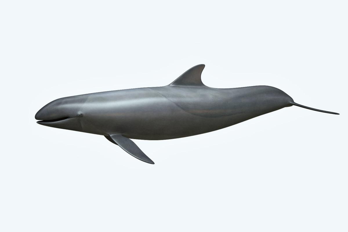 false killer whale 3D model